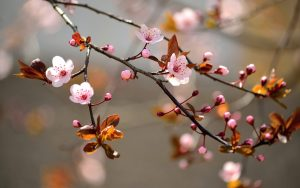 white_cherry_blossom_tree_in_close_up_photography_during_daytime